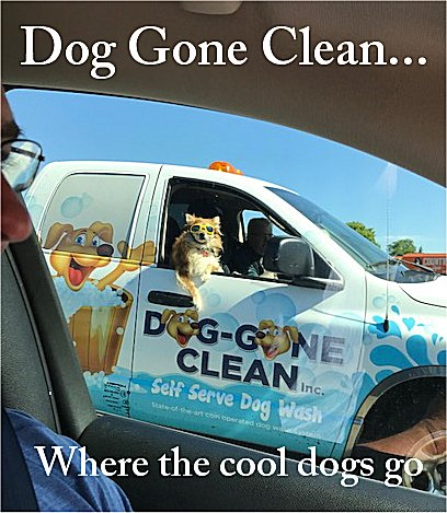 Dog gone clean inc self serve dog wash hamilton ontario photo courtesy of deborah reaney solutioingenieria Image collections